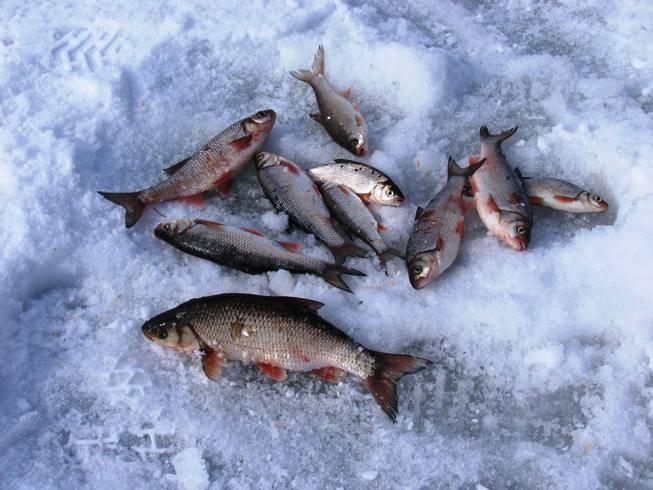в рыба снилась снегу