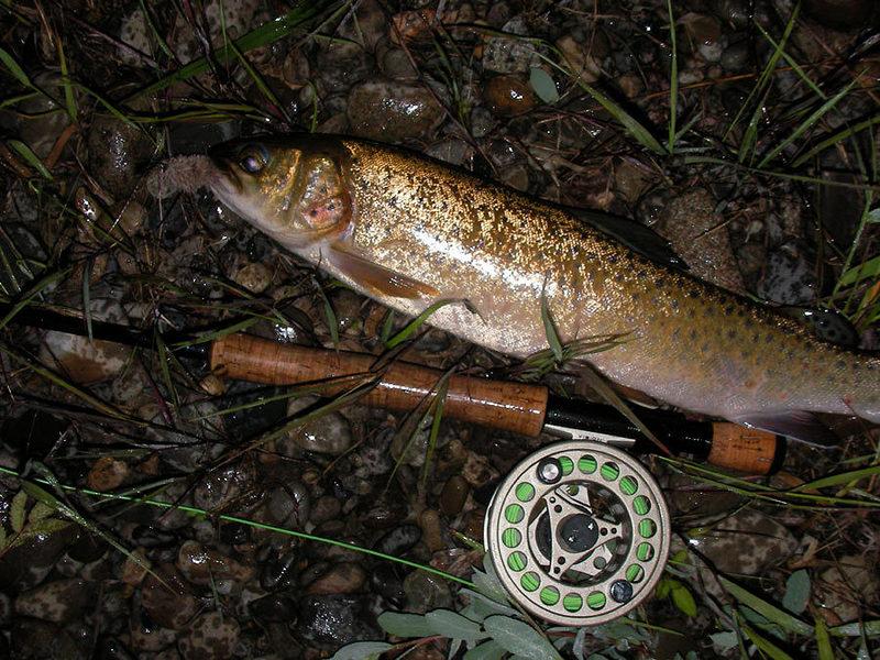 рыбалка на ленка осенью