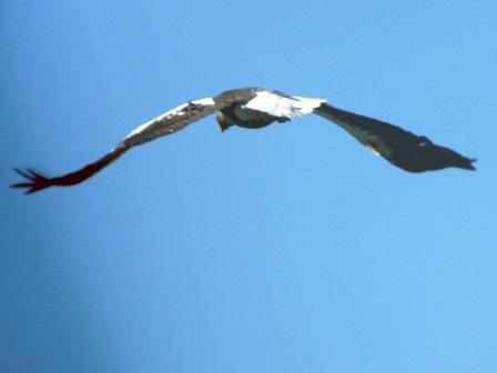 http://aborigen.rybolov.de/img/orlan4_w.jpg