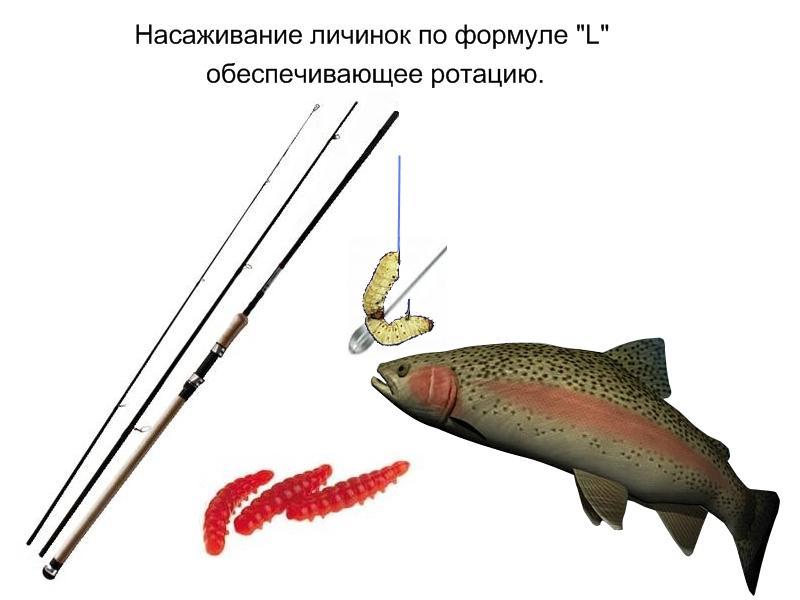 личинки для рыбалки где купить