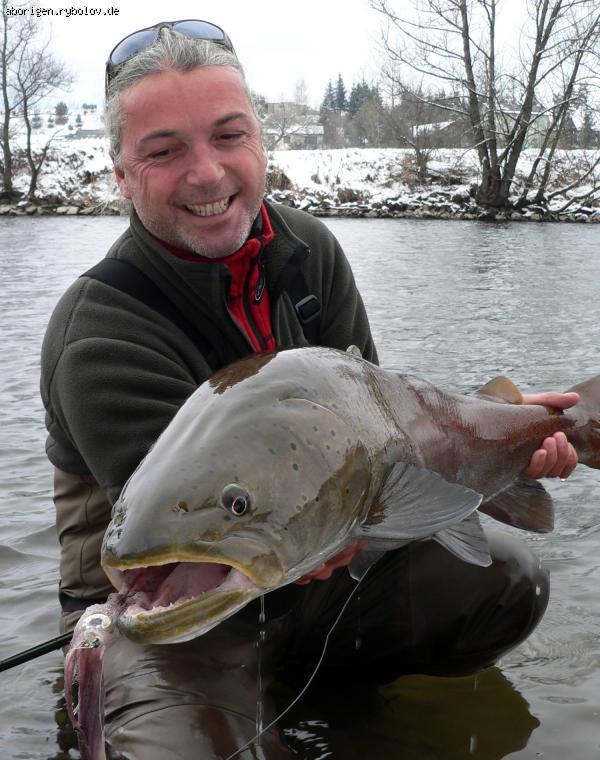 как ловить лосось дунайский