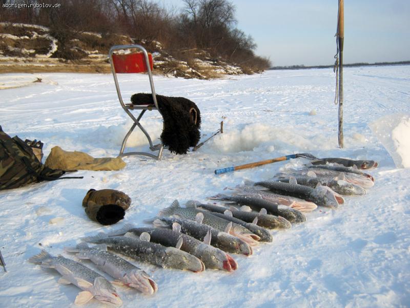 охота и рыбалка амур
