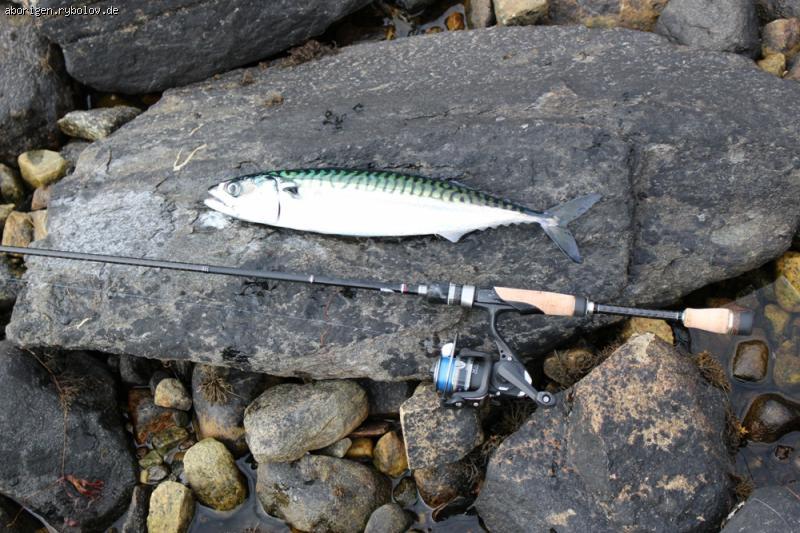 рыбалка нарвике
