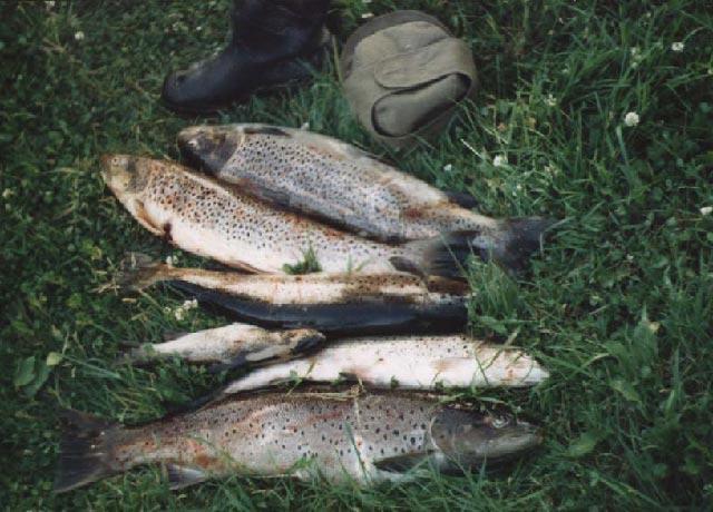 как ловить рыбу в тихвине